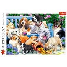 Puzzle 1000 - Psy w ogrodzie