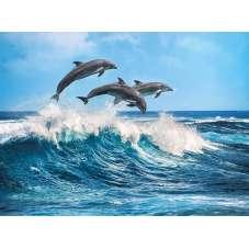Puzzle 500 - Delphins